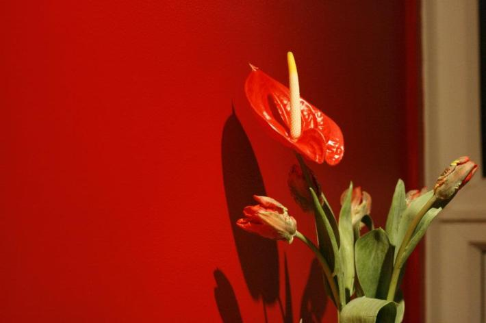 Red flower in red kitchen :)